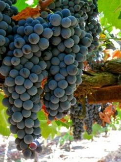vins-naturals